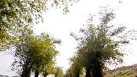 Hà Nội yêu cầu khẩn trương xử lý vi phạm đất đai ven sông Đuống