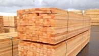 Đấu giá gỗ xẻ nhóm III, V và VII tại Kon Tum