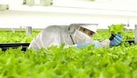 Nhiều doanh nghiệp đang gặp khó khăn với thủ tục thế chấp tài sản trên đất nông nghiệp. - Ảnh minh họa