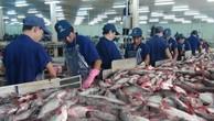 Xuất khẩu cá tra sang Hoa Kỳ vẫn ổn định. Ảnh: TTXVN