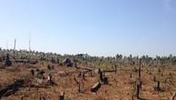 Bình Định: Nghịch lý mất 43 hecta rừng tự nhiên nhưng chính quyền không biết