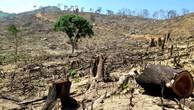 Vụ phá hơn 44 ha rừng tự nhiên ở Bình Định: Khởi tố vụ án hình sự