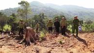 Vụ phá rừng ở Bình Định: Diện tích rừng bị phá lên gần 61 ha
