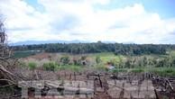 """Nhiều diện tích đất rừng trên lâm phần giao cho HTX Hợp Tiến bị đánh giá là… """"không có rừng"""". Ảnh: TTXVN"""