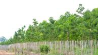 Đấu giá quyền sử dụng đất và TSGLVĐ tại huyện Ea Hleo, Đắk Lắk