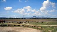 Đấu giá quyền sử dụng đất tại huyện Ninh Sơn, Ninh Thuận