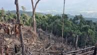 Gần 16ha rừng tự nhiên tại Bình Định tiếp tục bị tàn phá
