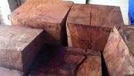 Phát hiện nhiều vụ khai thác gỗ hương quý trái phép