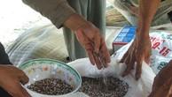 Lâm Đồng xử phạt 3 cửa hàng kinh doanh phân bón kém chất lượng