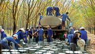 Năm 2020, Tập đoàn Công nghiệp Cao su Việt Nam đạt tăng trưởng 18%/năm