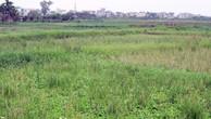 Đấu giá quyền sử dụng đất tại huyện Quảng Điền, Thừa Thiên Huế