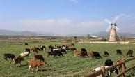 Trang trại bò sữa organic tiêu chuẩn châu Âu của Vinamilk tại Đà Lạt.