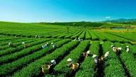 Kiện toàn nhân sự BCĐNN về Chương trình mục tiêu phát triển Lâm nghiệp bền vững