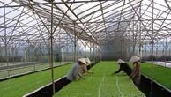 Cổ phần hoá, thoái vốn nhà nước tại 2 công ty nông nghiệp