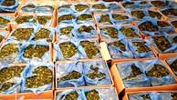 Bắt giữ 336 kg lá khat chứa chất ma túy tại sân bay Tân Sơn Nhất