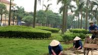 Trung tâm hành chính huyện Cẩm Mỹ - Đồng Nai: Chăm sóc cây xanh chỉ dành cho kỹ sư cầu đường?