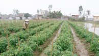 Hỗ trợ tổ chức tín dụng cho vay phát triển nông nghiệp