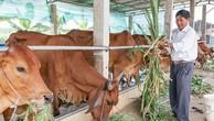 Đấu thầu mua bò giống: Rắc rối từ tiêu chí trọng lượng