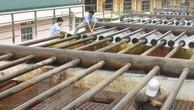 Quảng Nam kêu gọi đầu tư cấp nước sạch