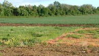 Bà Rịa - Vũng Tàu nghiên cứu đấu giá hơn 600 ha đất