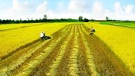 """Nâng tầm nông nghiệp Việt Nam: """"Trải thảm đỏ"""" kêu gọi đầu tư"""