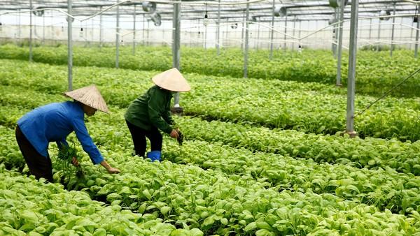 Nghị định 57/2018/NĐ-CP tạo thuận lợi cho các địa phương về hành lang pháp lý khi hỗ trợ doanh nghiệp vay tín dụng thực hiện các dự án nông nghiệp. Ảnh: Nhã Chi