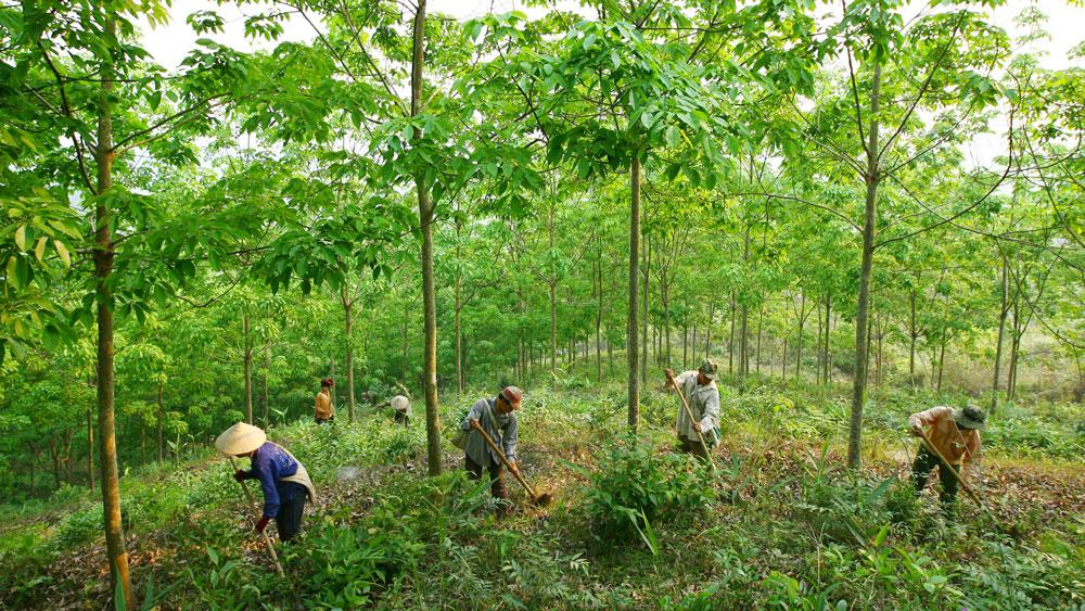 DN Việt đầu tư ra nước ngoài, nhất là trong lĩnh vực nông nghiệp, dễ gặp phải những rủi ro về môi trường, xã hội. Ảnh: Tường Lâm
