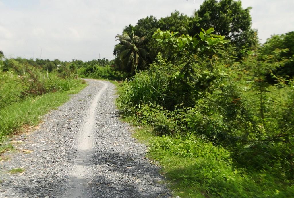 Đấu giá Quyền sử dụng đất tại huyện Phụng Hiệp, tỉnh Hậu Giang