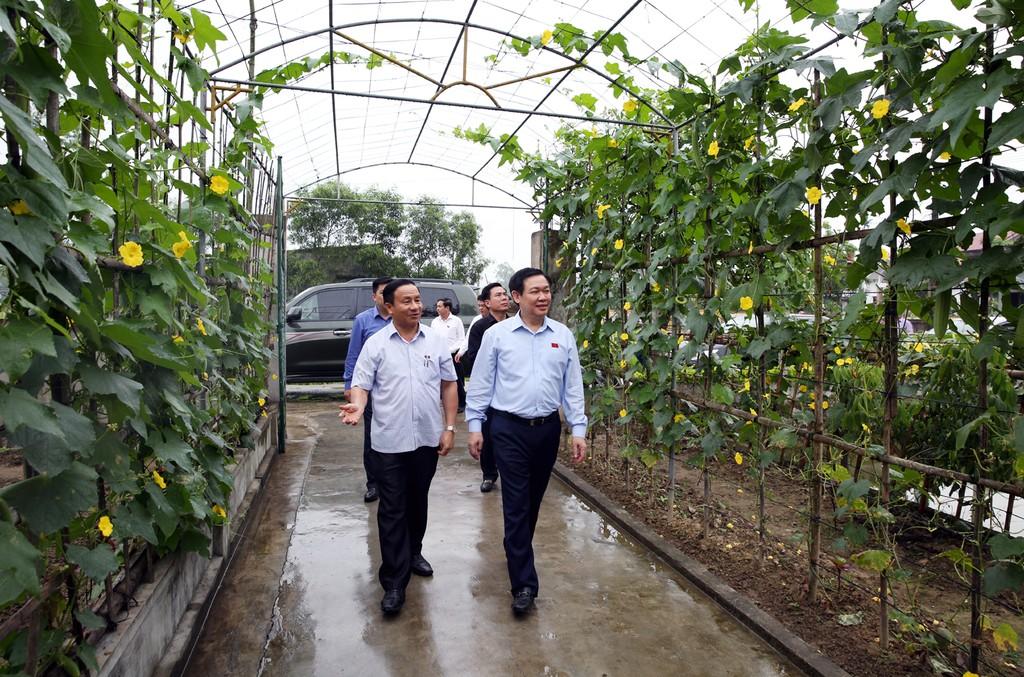 Phó Thủ tướng Vương Đình Huệ thăm nông thôn mới kiểu mẫu Hà Tĩnh - ảnh 1