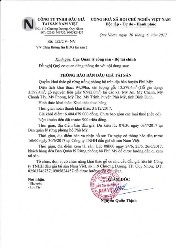 Đấu giá quyền khai thác gỗ rừng trồng trên địa bàn huyện Phù Mỹ, Bình Định - ảnh 1