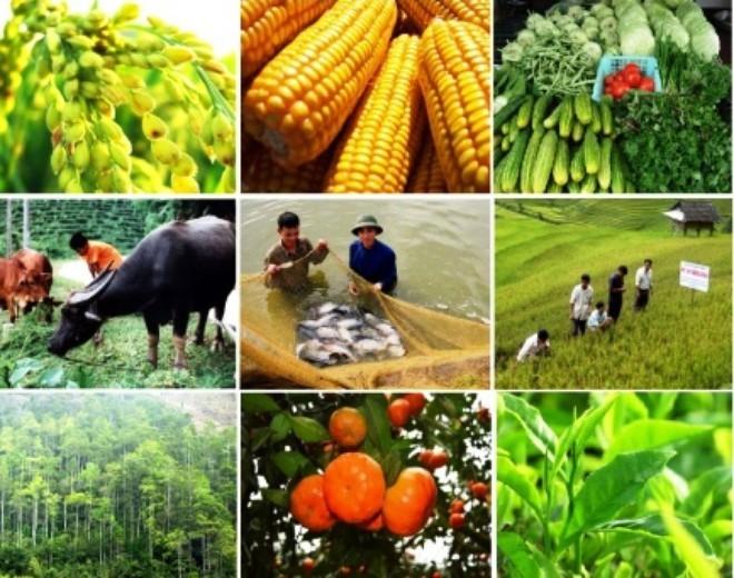Tái cơ cấu ngành trồng trọt, chăn nuôi theo hướng hiện đại