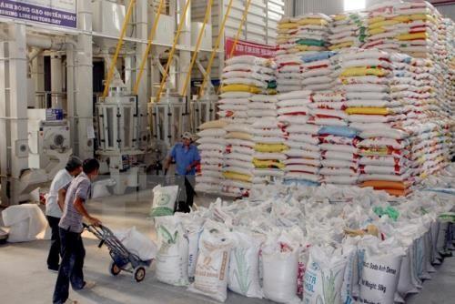Xuất khẩu gạo tăng nhờ bán giá thấp? - ảnh 1