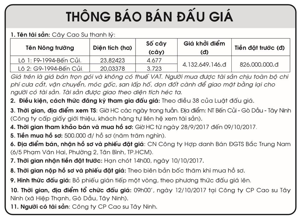 Đấu giá cây cao su thanh lý tại Tây Ninh - ảnh 1