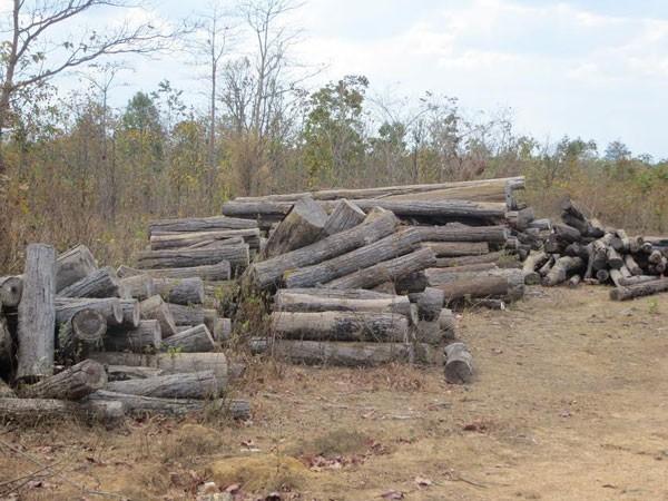 Xử lý việc khai thác, mua, bán, vận chuyển gỗ rừng tự nhiên trái phép