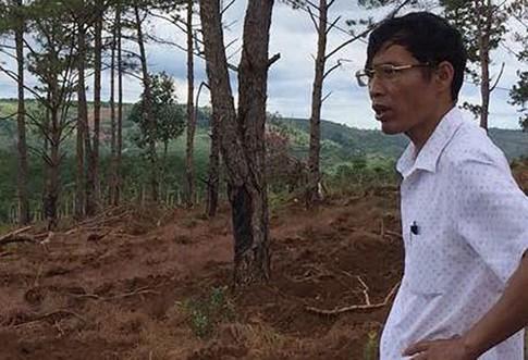 Ông Thụy và khu vực rừng thông bị mất.