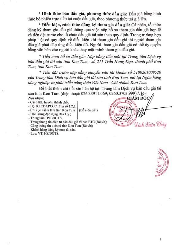 Đấu giá gỗ xẻ từ nhóm IIA đến nhóm VII tại Kon Tum - ảnh 3