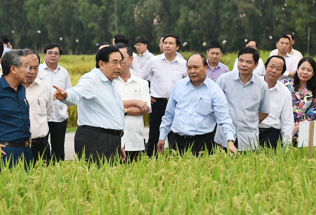 Thủ tướng: 'Các ông nông nghiệp phải quần xắn móng lợn, lội ruộng với dân' - ảnh 3