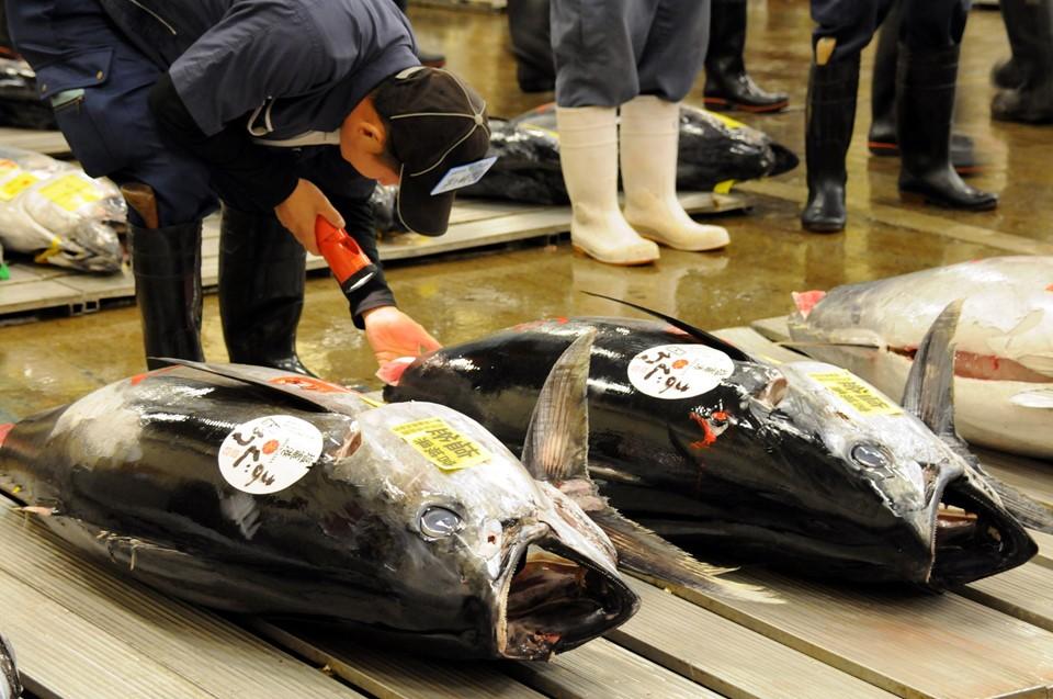 Cá ngừ 400 kg được đấu giá trước ngày đóng cửa chợ ở Nhật - ảnh 1