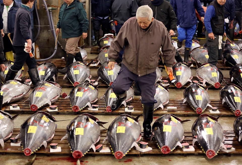 Cá ngừ 400 kg được đấu giá trước ngày đóng cửa chợ ở Nhật - ảnh 2