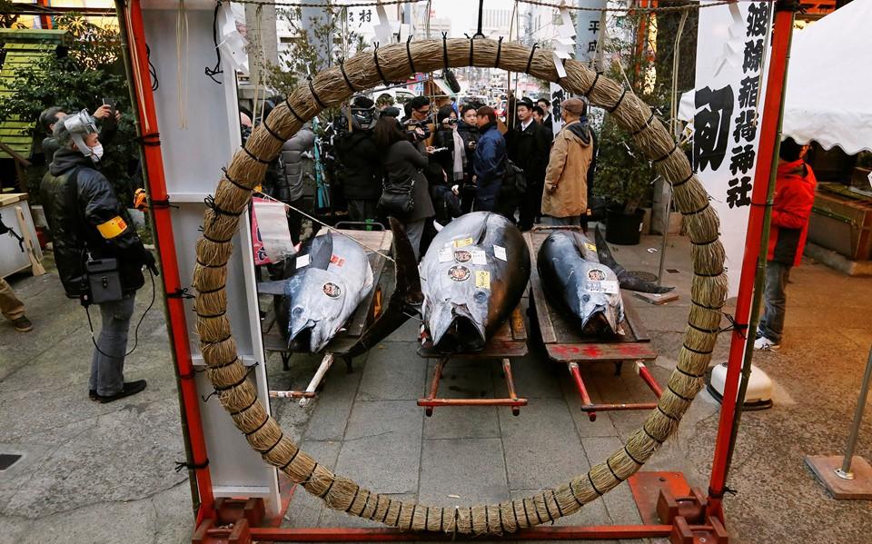 Cá ngừ 400 kg được đấu giá trước ngày đóng cửa chợ ở Nhật - ảnh 4