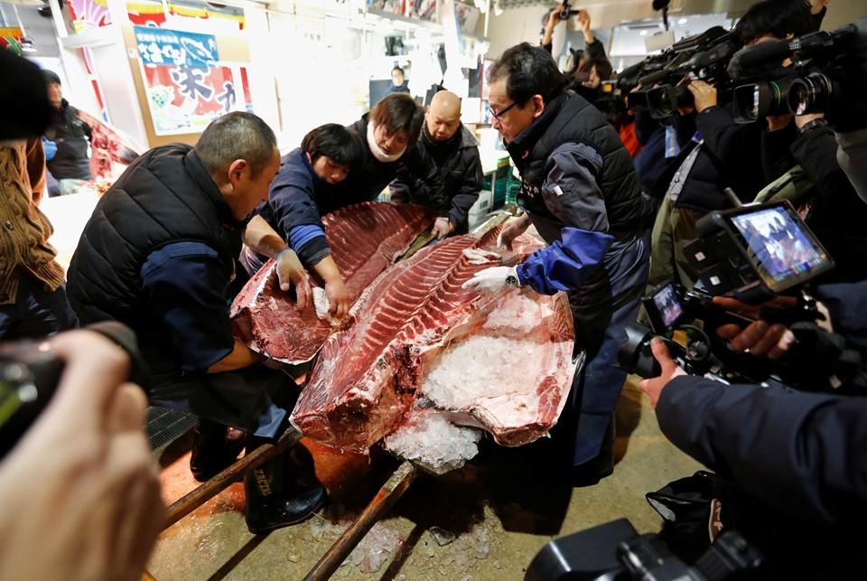 Cá ngừ 400 kg được đấu giá trước ngày đóng cửa chợ ở Nhật - ảnh 5