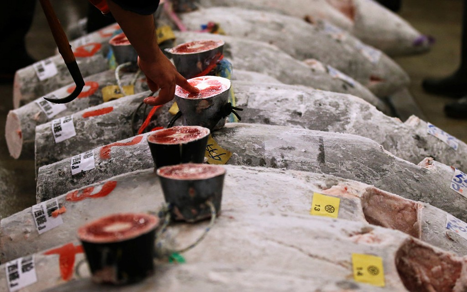 Cá ngừ 400 kg được đấu giá trước ngày đóng cửa chợ ở Nhật - ảnh 6