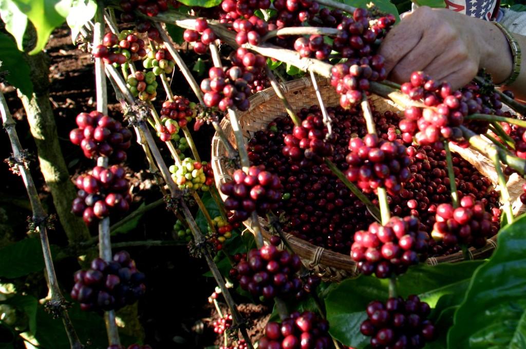 DN kiến nghị 4 giải pháp nâng cao giá trị nông sản xuất khẩu. Ảnh: Tường Lâm