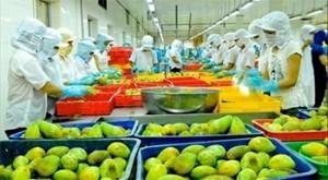 Xuất khẩu rau quả tăng mạnh