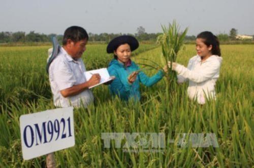 Công ty cổ phần giống cây trồng Trung ương hiện là đơn vị có khối lượng sản phẩm tiêu thụ và bộ sản phẩm đa dạng nhất tại Việt Nam. Ảnh minh họa: TTXVN