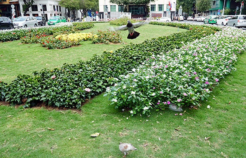 Bãi xe to nhất Sài Gòn thành công viên hoa - ảnh 1