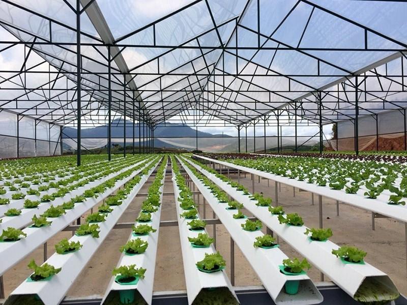 23 startups lọt chung kết Thách thức công nghệ nông nghiệp vùng Mê Kông