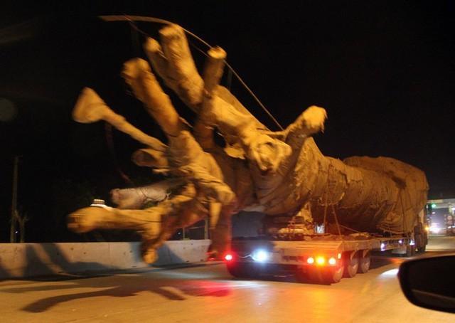 Chiếc xe đầu kéo chở một cây gỗ cực khủng, có dấu hiệu vi phạm về an toàn giao thông chạy băng băng trên QL1A