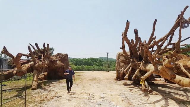 """Công an điều tra những người liên quan vụ 3 cây """"quái thú"""" - ảnh 3"""