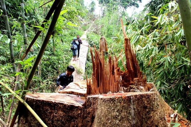 Hiện trường vụ phá rừng tại huyện Nam Giang